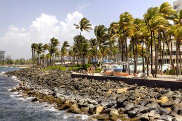 Puerto Rice Tropical Coastline