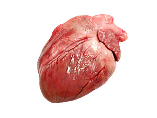 Pig heart isolated on white background.