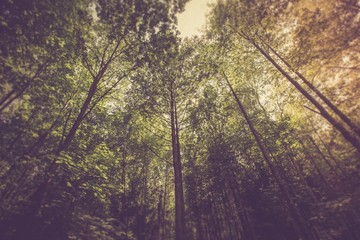 Vintage photo of green summer forest