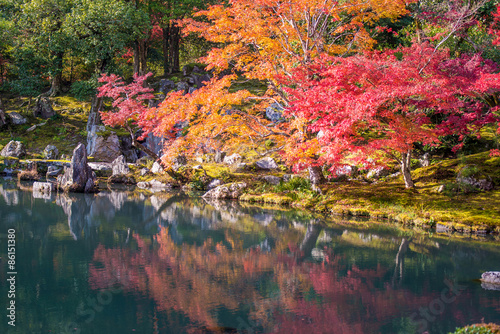 Wall mural Japanese garden during falling season