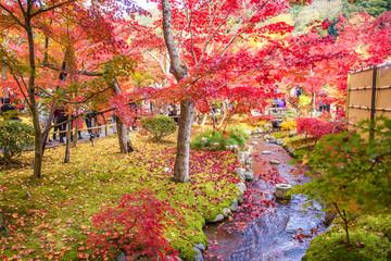 Wall Mural - japanese garden in colorful autumn season