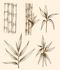 Vintage bamboo branch