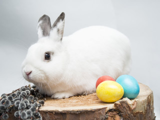 White rabbit, easter eggs and willow on a wooden background.
