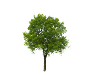 Colored Silhouette Tree Isolated on White Backgorund. Vector