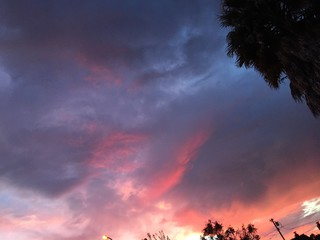 pink sunset and palm tree