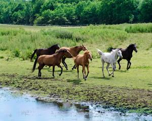 pferde auf der wiese im galopp