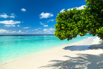 tree giving shade on tropical paradise beach
