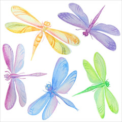 Collection of watercolor dragonflies.