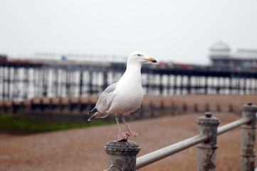 Seagull is standing on metal bar