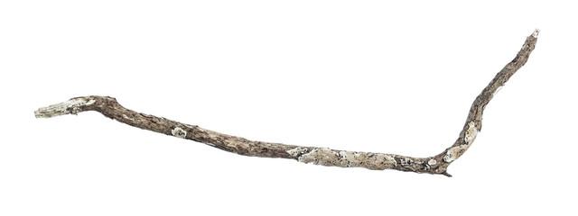 dry dead branch isolated on white background Fotoväggar