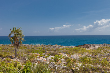 Shore of Grand Cayman Island, Cayman Islands