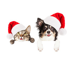 Fototapete - Happy Christmas Dog and Cat Over White Banner