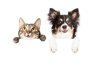 Fototapete - Happy Dog and Cat Over White Banner