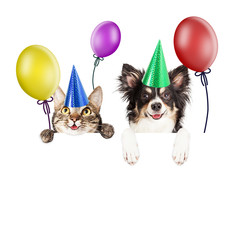 Fototapete - Party Cat and Dog Over White Banner