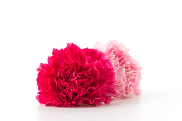 pink and red carnations flower