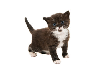 small black-white kitten