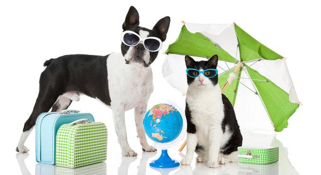 Hund und Katze fahren in den Urlaub