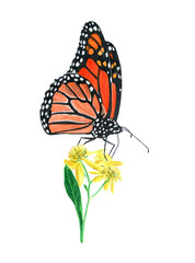 hand drawn oil pastel painting of orange monarch butterfly on yellow flowers, Danaus plexippus