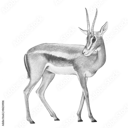Hand drawn pencil sketch of africa gazelle deer with curved horns fast wild animal