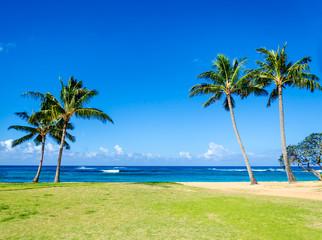 Wall Mural - Cococnut Palm trees on the sandy Poipu beach in Hawaii