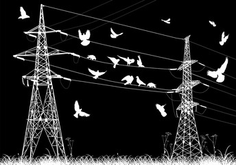 electrical pylons and birds isolated on black