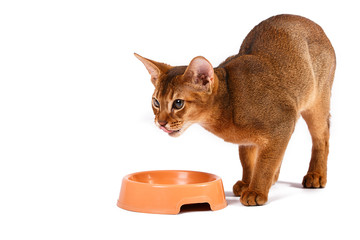Abyssinian cat food