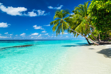Tuinposter Strand coco palms on tropical paradise beach with turquoise blue water and blue sky