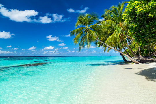 coco palms on tropical paradise beach with turquoise blue water and blue sky