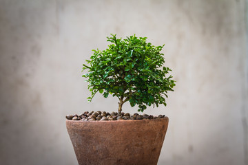 Wall Mural - Small tree in the old pot