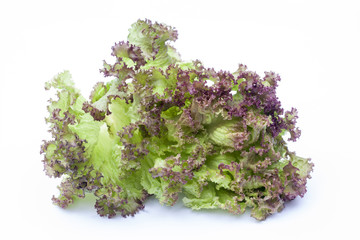 Lollo Rossa, lettuce isolated on white background, selective focus