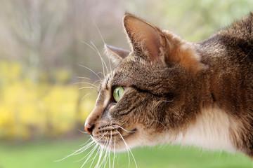 Katze auf der Jagd