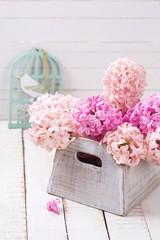 Tender hyacinths in box