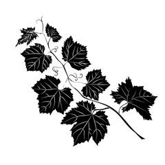 Grape Leaves baroque plants