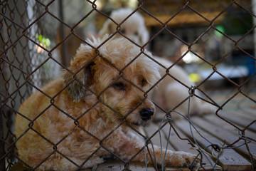 Sadly caged dog
