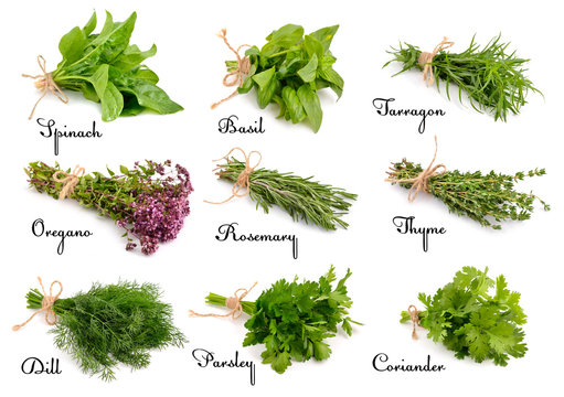 Collection of cooking herbs and spices.