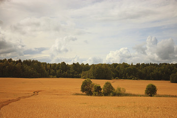 field landscape Indian summer grain harvest expanse