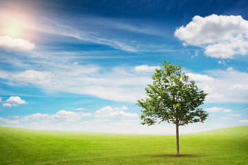 beautiful landscape of lonely tree