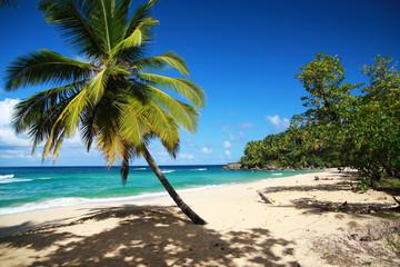 Palm on caribbean sea beach