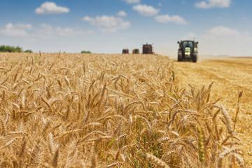 Combine harvester harvesting wheat .
