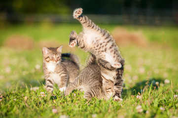 Little funny kittens playing outdoors