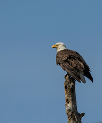 Sentinel.