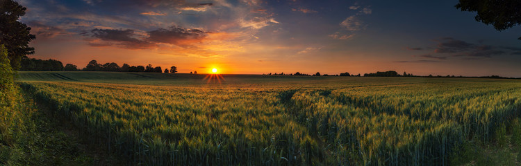 Aluminium Prints Village Panoramic sunset over a ripening wheat field