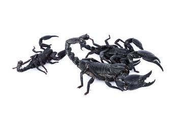 3 Black Storepions