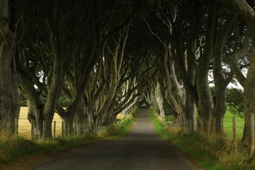 Dark hedges (Northern Ireland) Game of Thrones film location