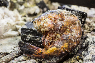 Shrimp burnt
