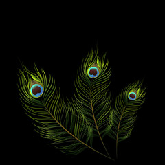 vector peacock design on black background.vector illustration