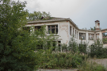 abandoned building overgrown with vegetation
