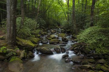 cascade in lush forest in South Carolina