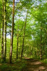 Wald an der allten Aare | Lyss BE
