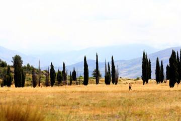 landscape autumn meadows field